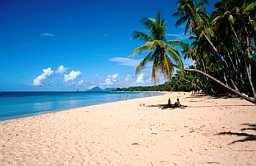Beach20Palm0MQ