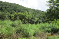 Dominica 200 acres of paradise 2