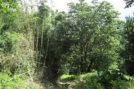 Dominica 200 acres of paradise 6