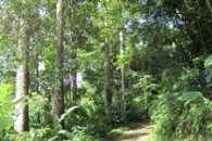 Dominica 200 acres of paradise 8