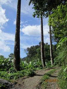 Dominica 200 acres of paradise 9