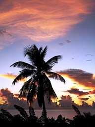 Sunset20Palm20MQ
