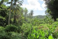 LAND 3  St Lucia MIC 005 L