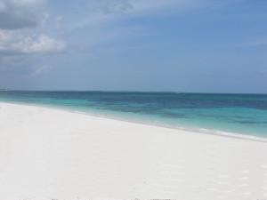 Beach View - Bahama palm shores