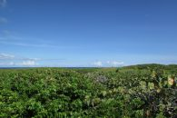 Tilloo Cay Land overland