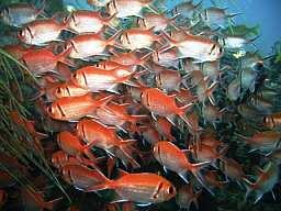 Fish20MQ