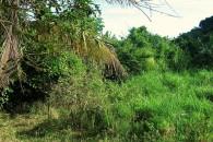 Saba Land for sale - 03