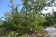 Bahamas canal land - foliage view