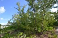 Bahamas canal land - foliage view 2